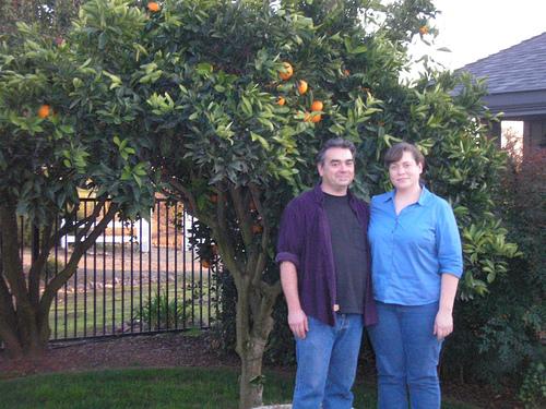 Oranges_1